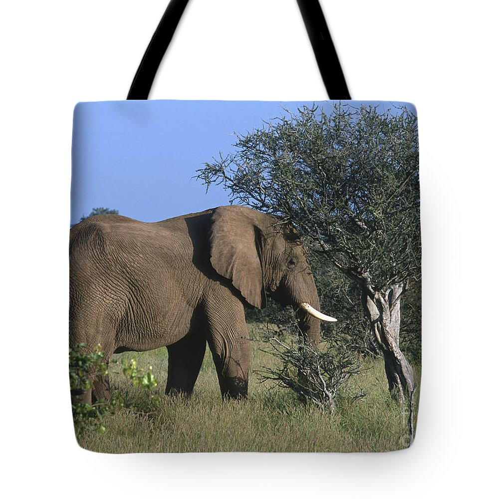 Africa Tote Bag featuring the photograph Just Browsing by Sandra Bronstein