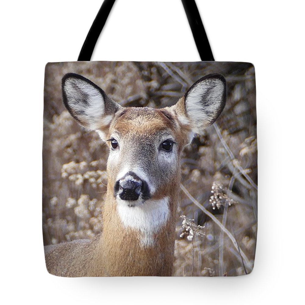 Buck Tote Bag featuring the photograph Just Chillin 2 by Debbie Storie