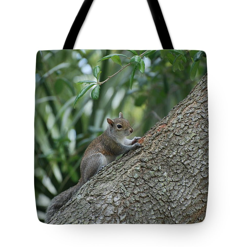 Squirrels Tote Bag featuring the photograph Just Chilling Out by Rob Hans