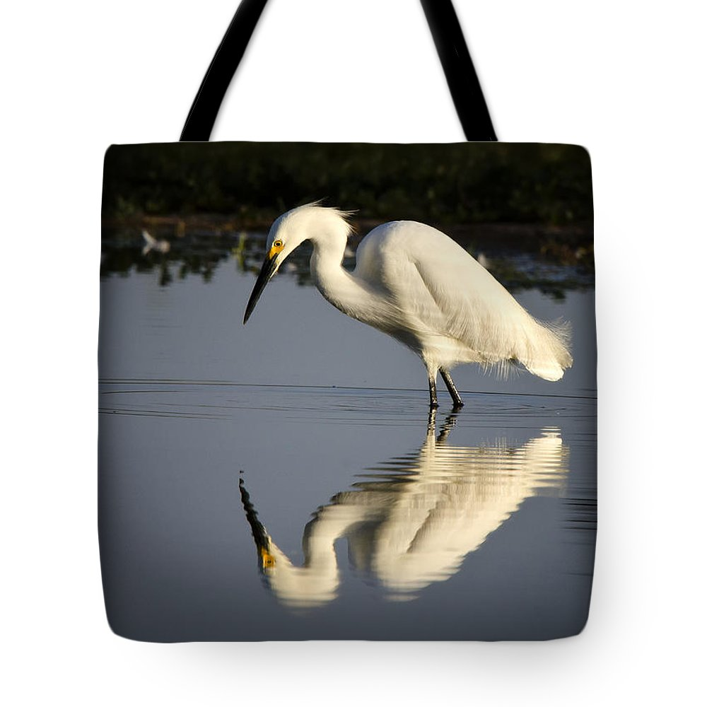 Snowy Egret Tote Bag featuring the photograph Just Like Looking In The Mirror by Saija Lehtonen