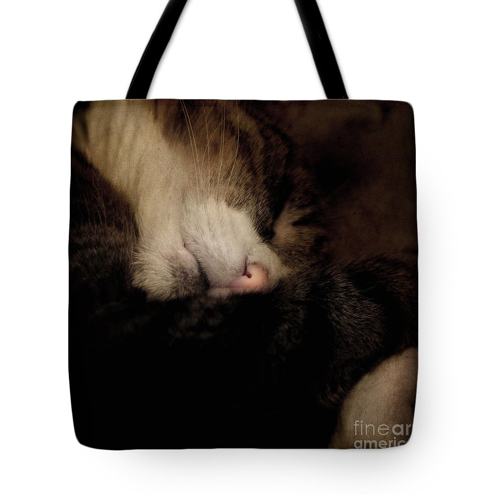 Cat Tote Bag featuring the photograph Just Sleep by Angel Ciesniarska