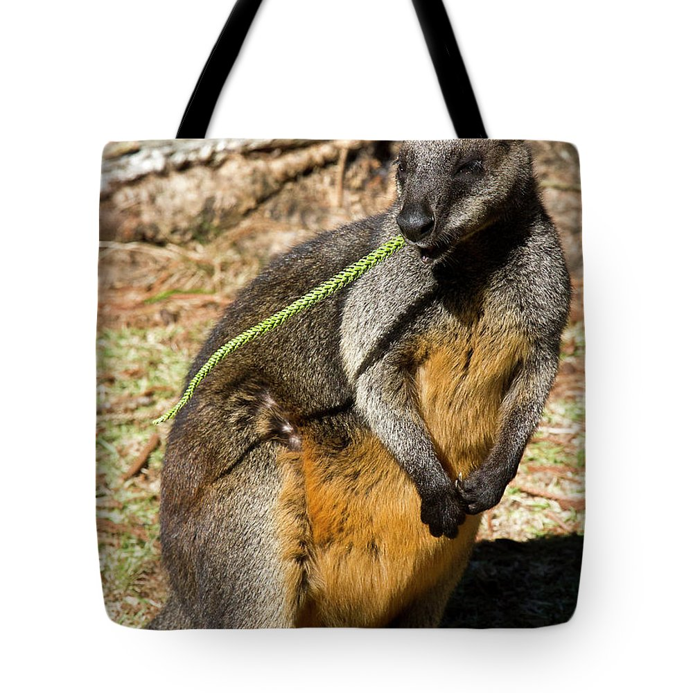 Swamp Tote Bag featuring the photograph Just Snacking by Miroslava Jurcik