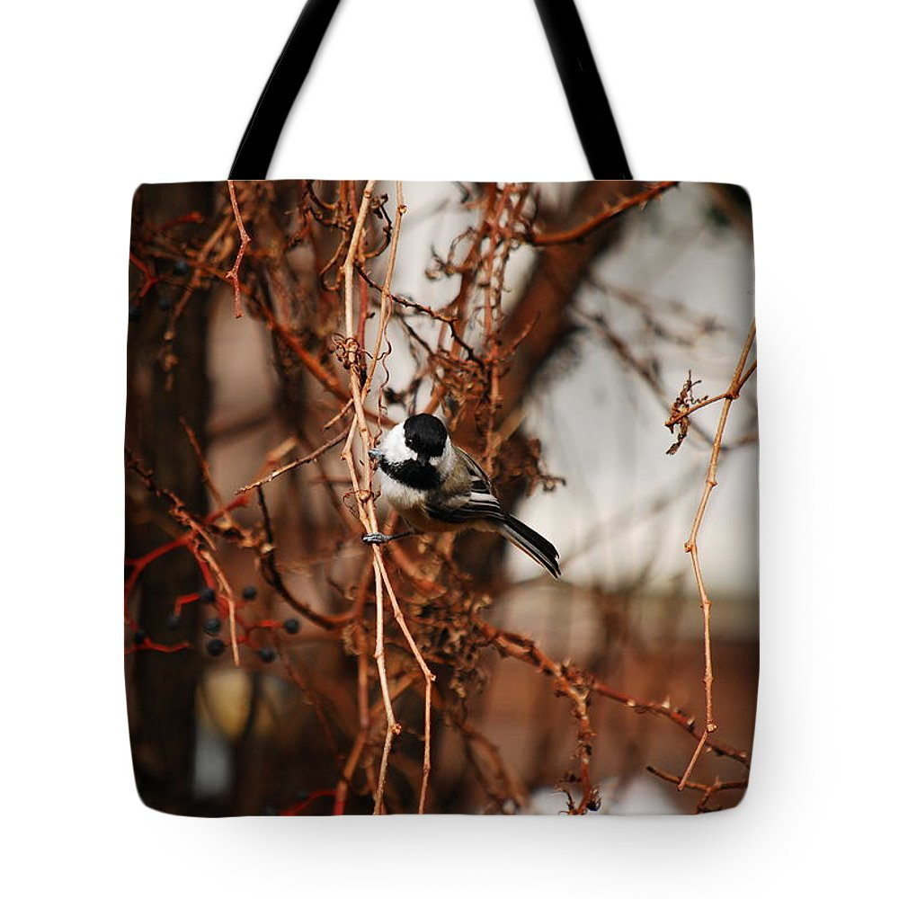 Chickadee Tote Bag featuring the photograph Just Waiting by Lori Tambakis