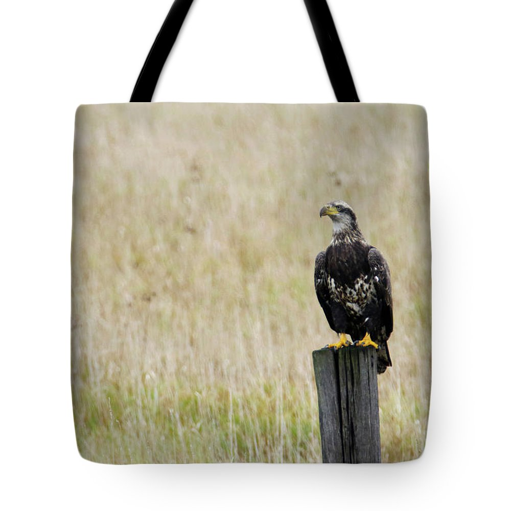 Juvenile Tote Bag featuring the photograph Juvenile Eagle On Post by Brook Burling