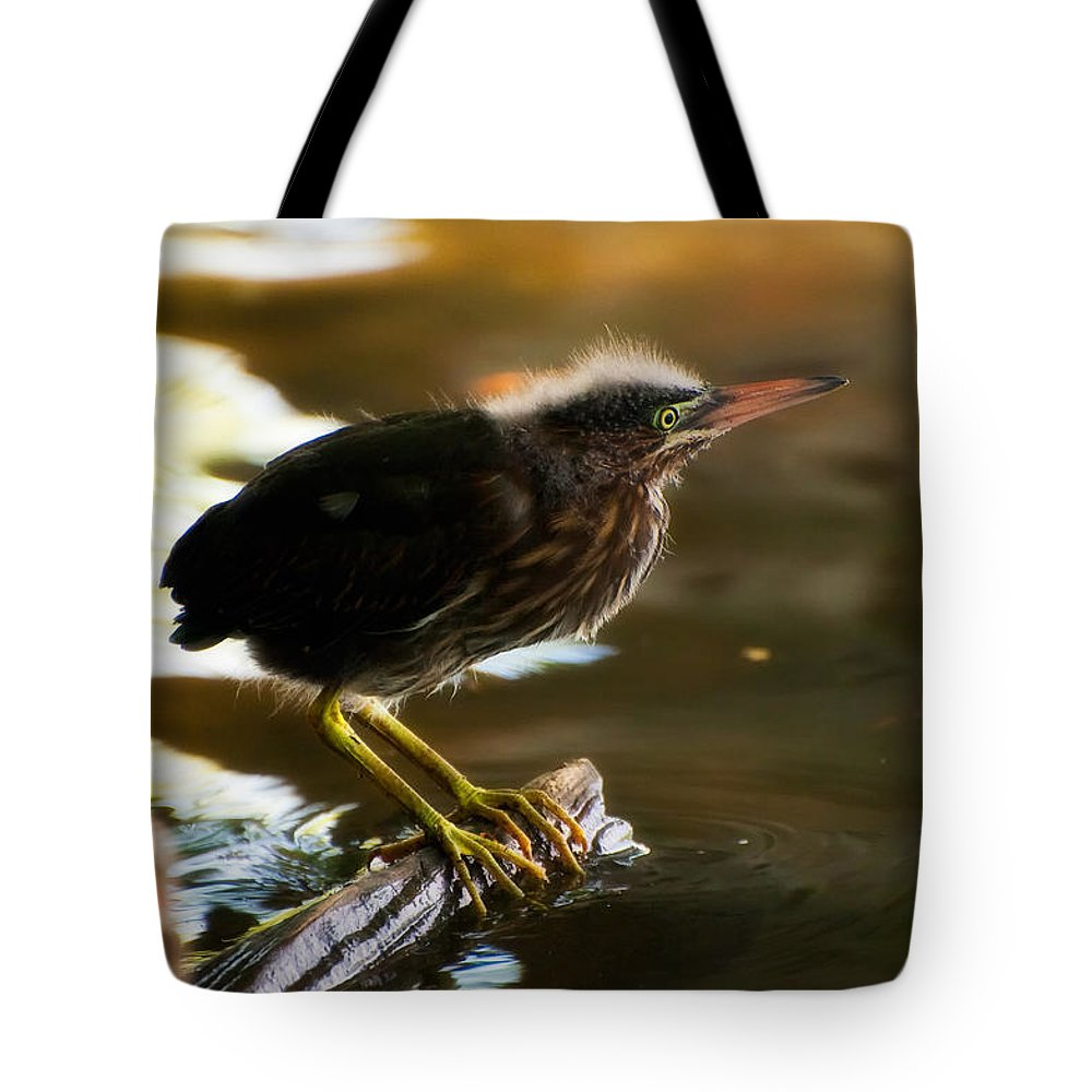 Animal Tote Bag featuring the photograph Juvenile Green Heron by Rich Leighton