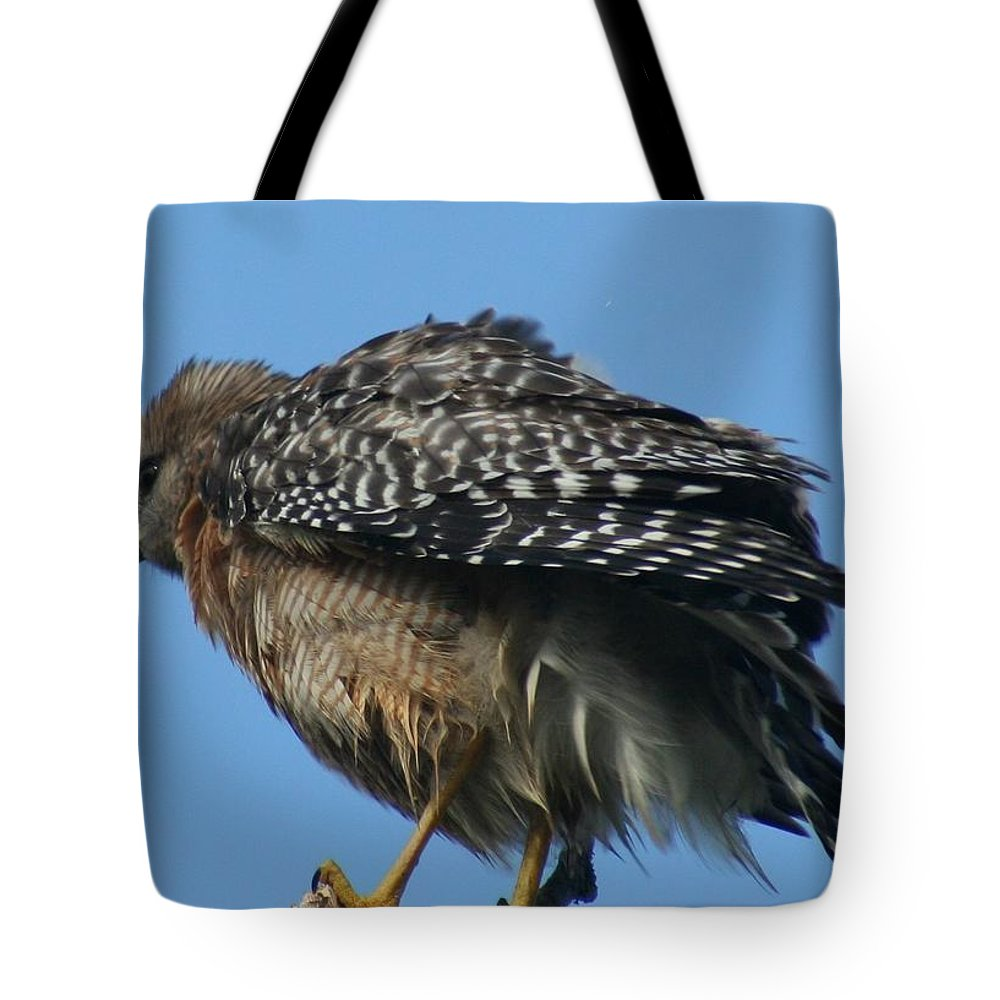 Bird Tote Bag featuring the photograph Juvenile Red-shouldered Hawk by Dennis Rosa