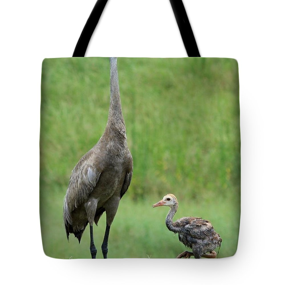 Sandhill Cranes Tote Bag featuring the photograph Juvenile Sandhill Crane With Protective Papa by Carol Groenen