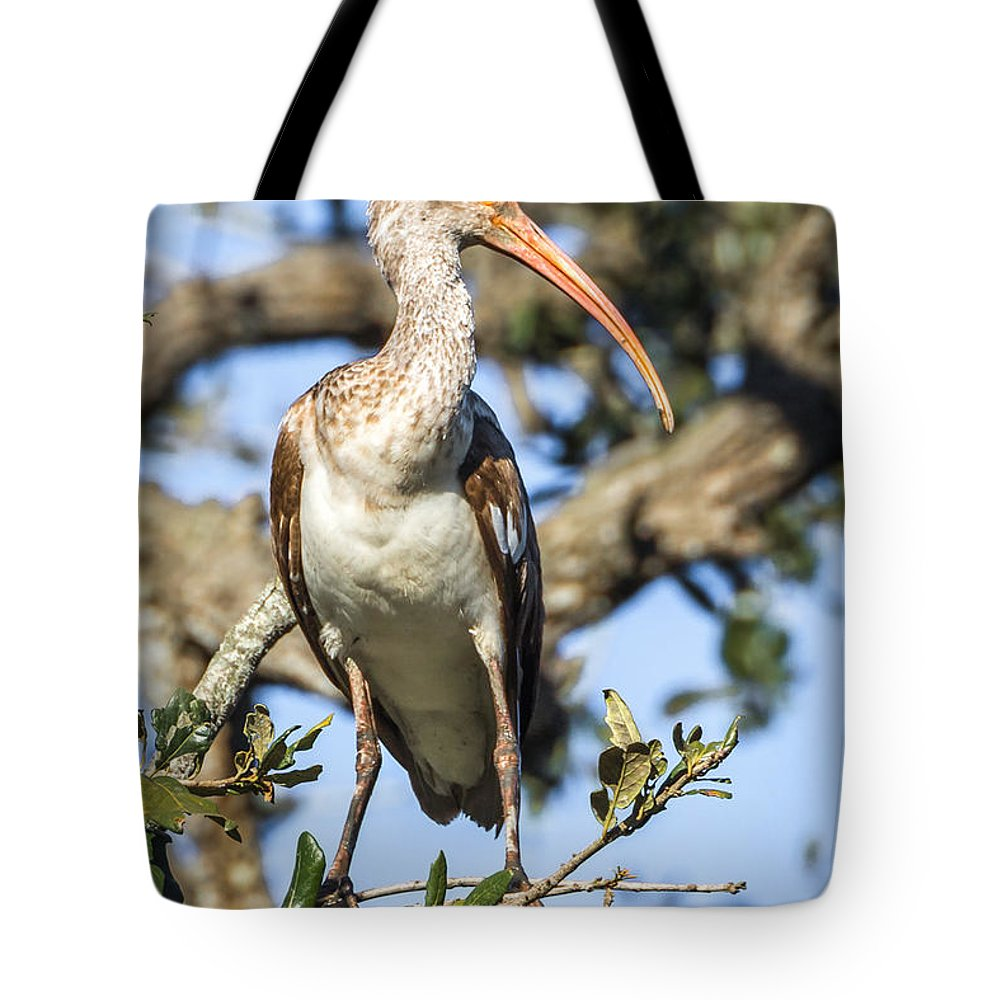 Waterfowl Tote Bag featuring the photograph Juvenile White Ibis by Susan Grube