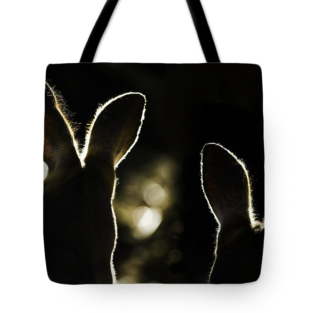 Kangaroo Tote Bag featuring the photograph Kangaroos Backlit by Sheila Smart Fine Art Photography