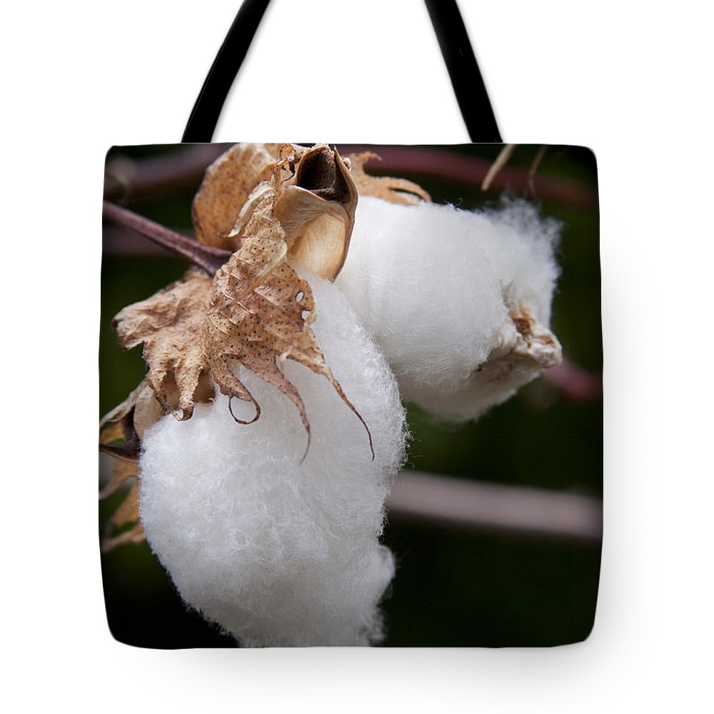 Kapok - Ceiba Pentandra - Silk Cotton Tree Tote Bag