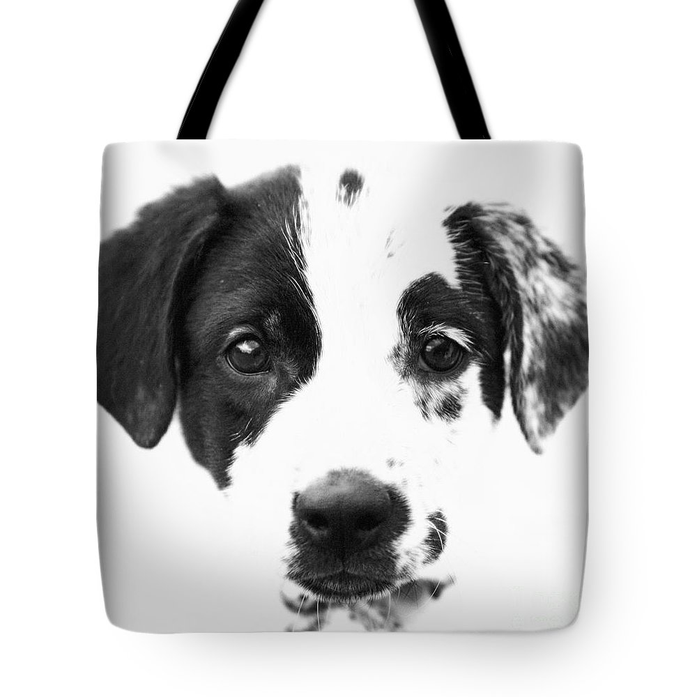 Dogs Tote Bag featuring the photograph Karma by Amanda Barcon