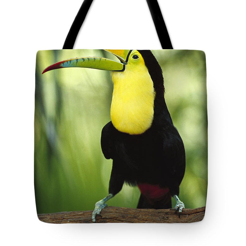 Mp Tote Bag featuring the photograph Keel Billed Toucan Calling by Gerry Ellis