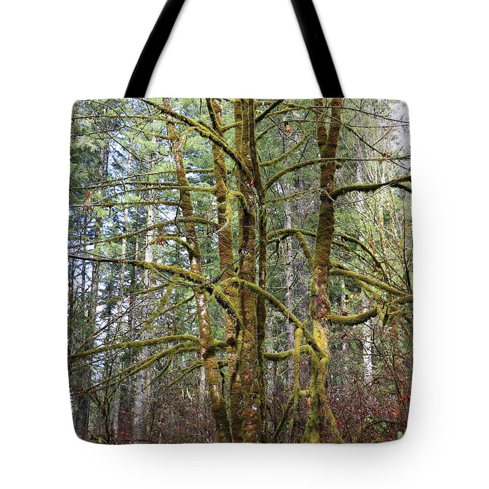 Trees Tote Bag featuring the photograph Keeping It Green by Dani Keating