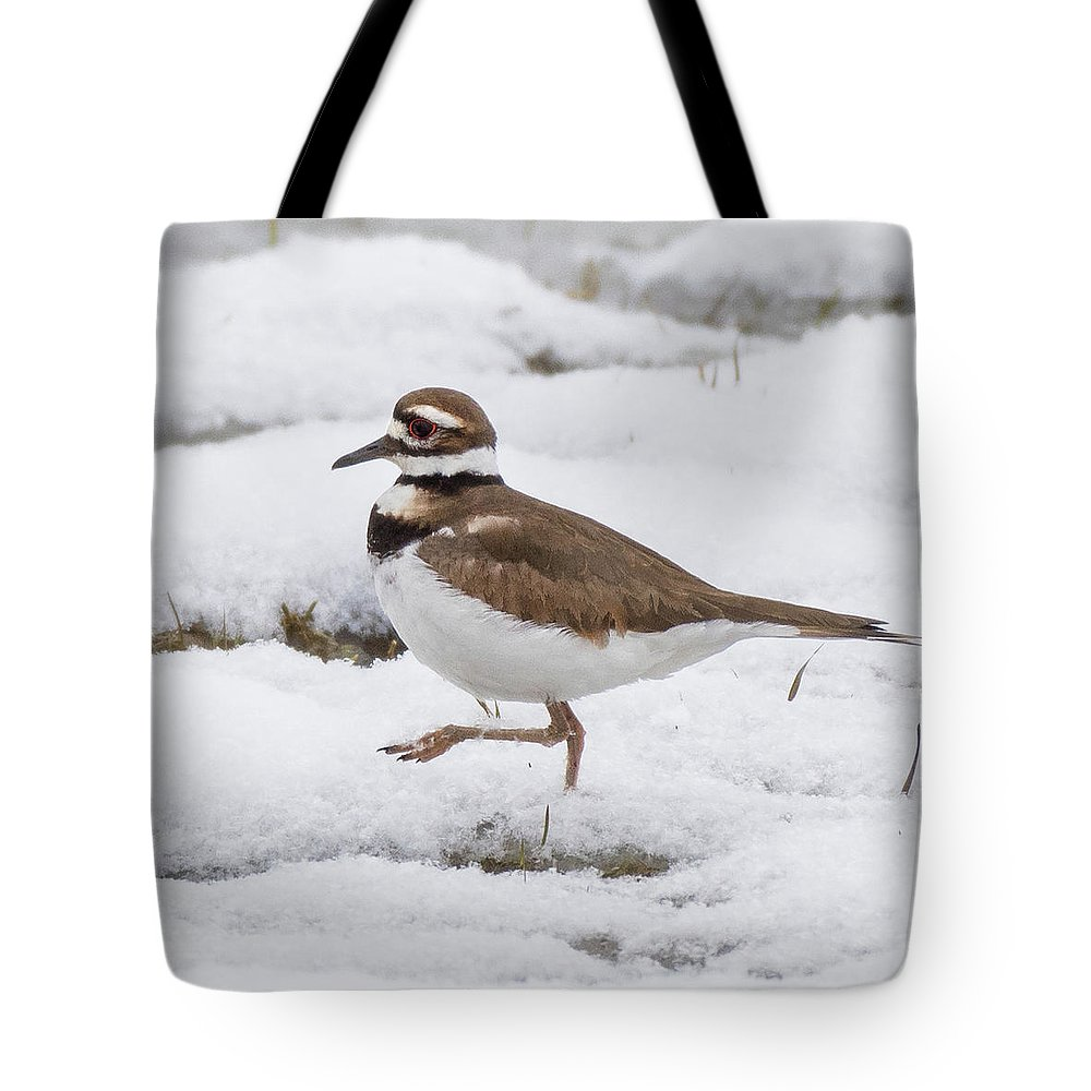 Square Tote Bag featuring the photograph Killdeer Square by Bill Wakeley