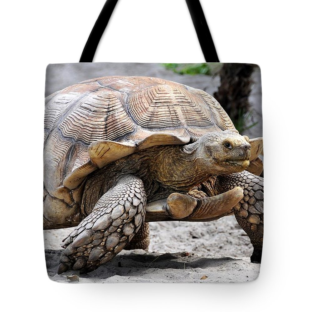 Galapagos Turtle Tote Bag featuring the photograph King Of The Galapagos by David Lee Thompson