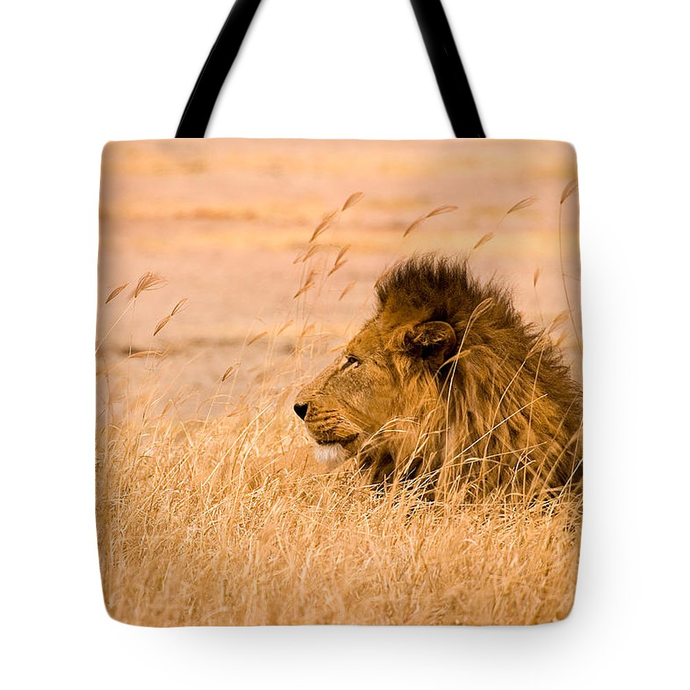 3scape Tote Bag featuring the photograph King Of The Pride by Adam Romanowicz