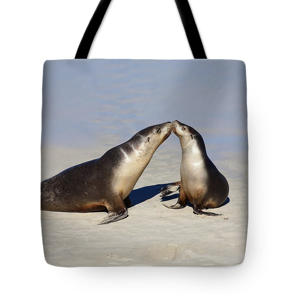 Sea Lion Tote Bag featuring the photograph Kiss by Mike Dawson