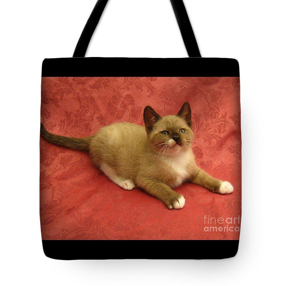 Kitten Mink Chocolate And White X Burmese Snowshoe Silktapestrykittenstm  Tote Bag