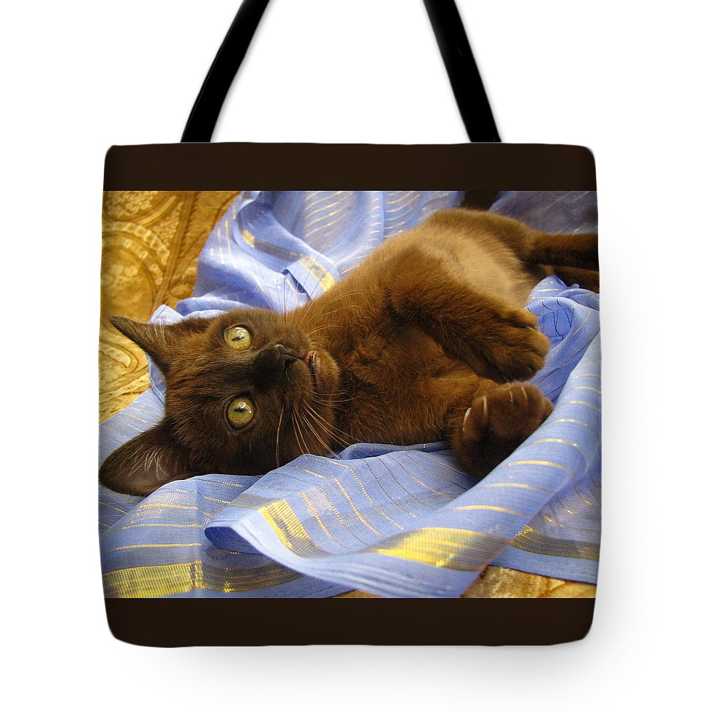 Kitten Thai Import Sable Sepia Chocolate Brown Burmese Tonkinese  Silktapestrykittenstm Tote Bag