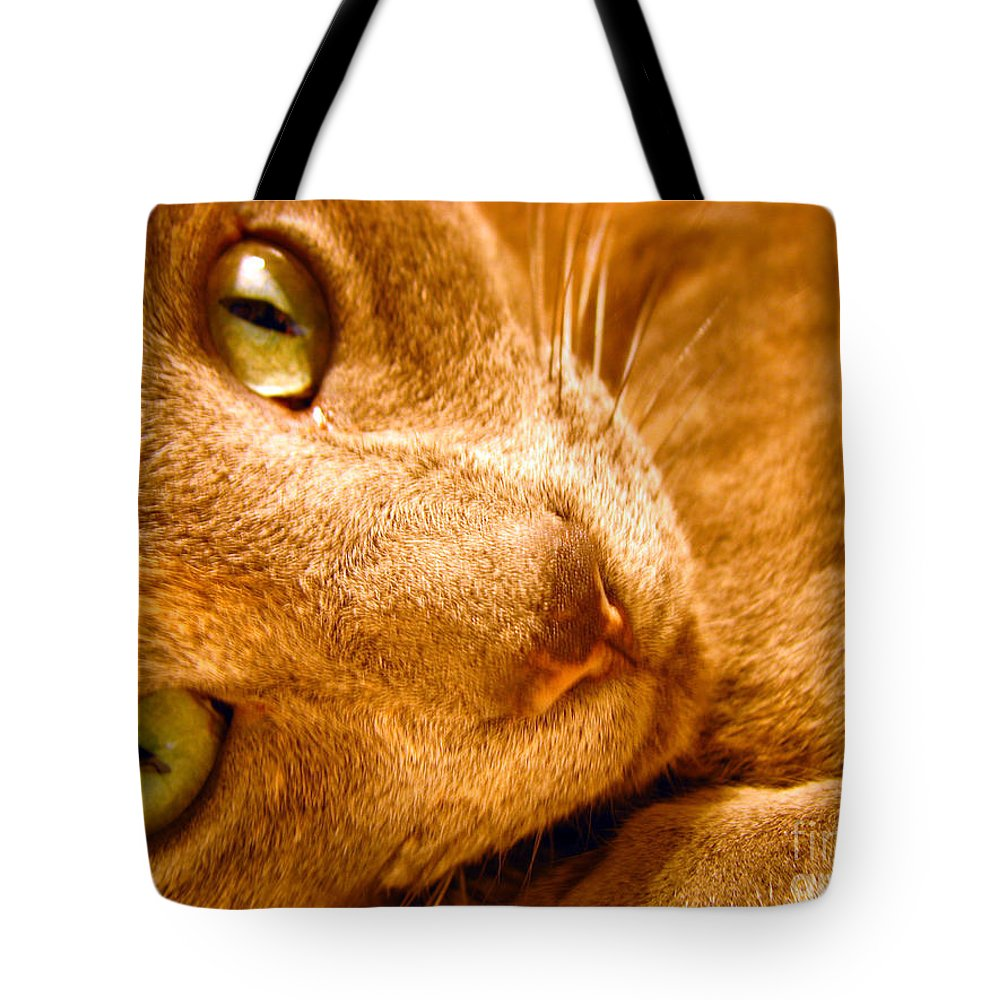 Cats Tote Bag featuring the photograph Kitty by Amanda Barcon