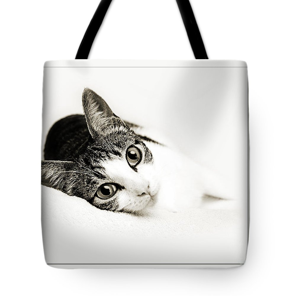Fine Art Cat Tote Bag featuring the photograph Kitty Cat Greeting Card Congratulations by Andee Design