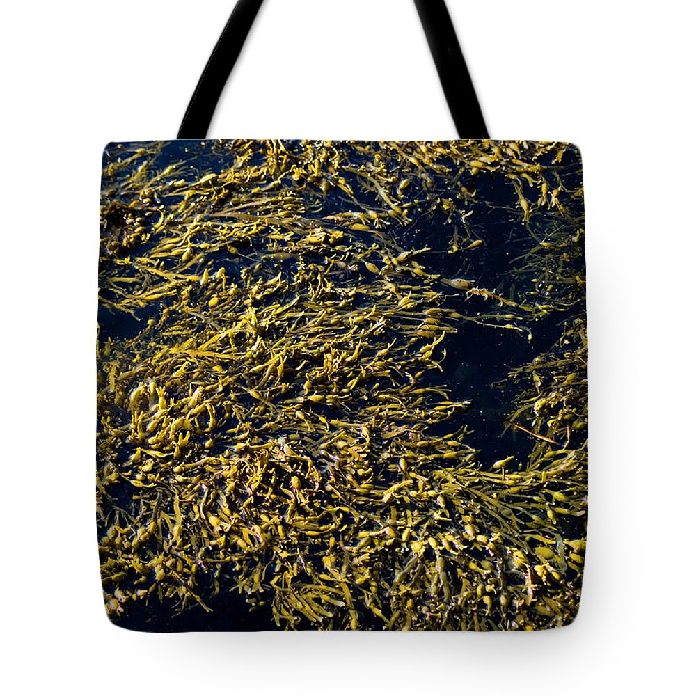 Photography Tote Bag featuring the photograph Knotted Wrack Seaweed Floating Atop by Todd Gipstein