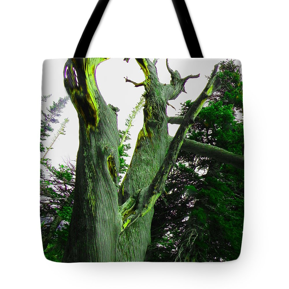 Tree Tote Bag featuring the photograph Knotty Tree by Jessica Harrington