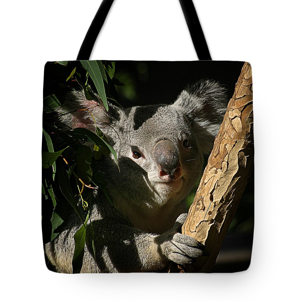 Zoo Tote Bag featuring the photograph Koala Bear 5 by Anthony Jones