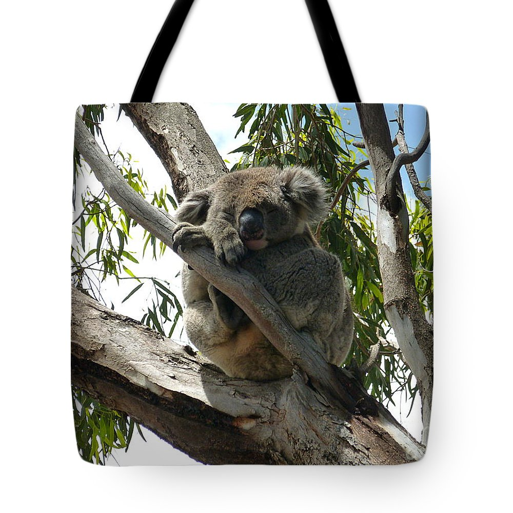 Koala Tote Bag featuring the photograph Koala - Sleeping by Birgit Moldenhauer