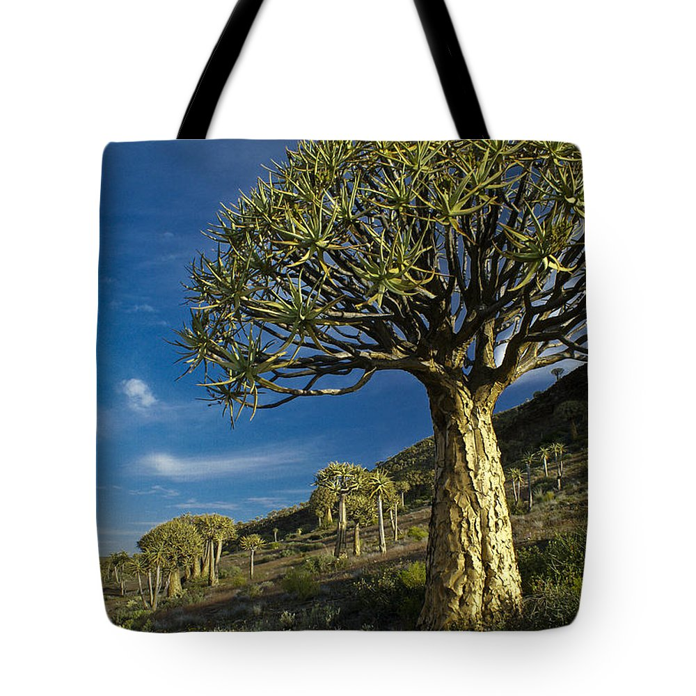 Africa Tote Bag featuring the photograph Kokerboom by Michele Burgess