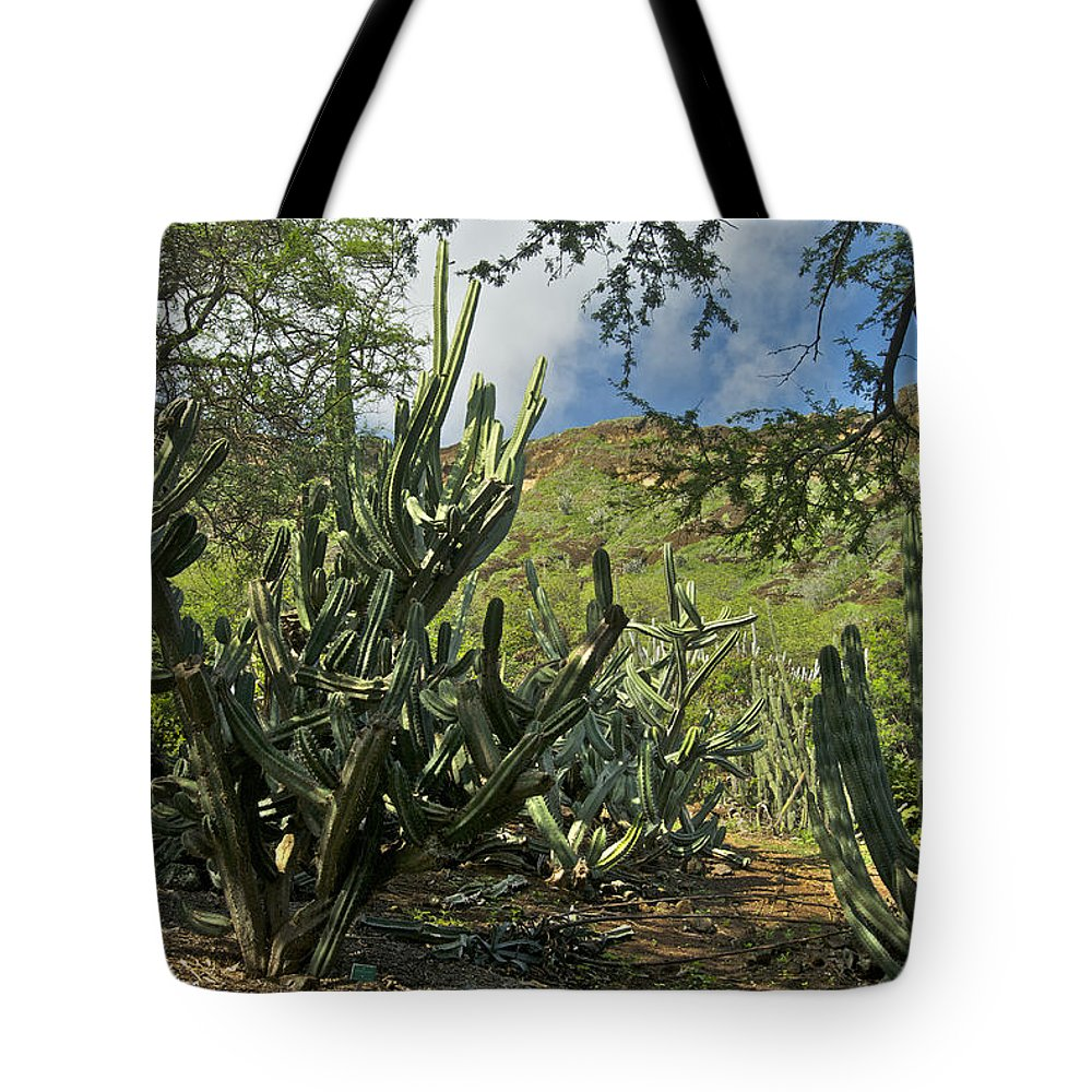 Landscape Tote Bag featuring the photograph Koko Crater by Michael Peychich