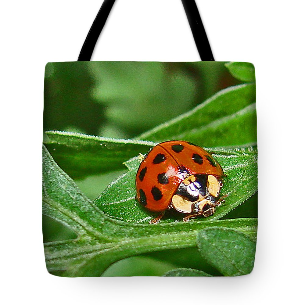 Bugs Tote Bag featuring the photograph Lady Bug by Mary Halpin