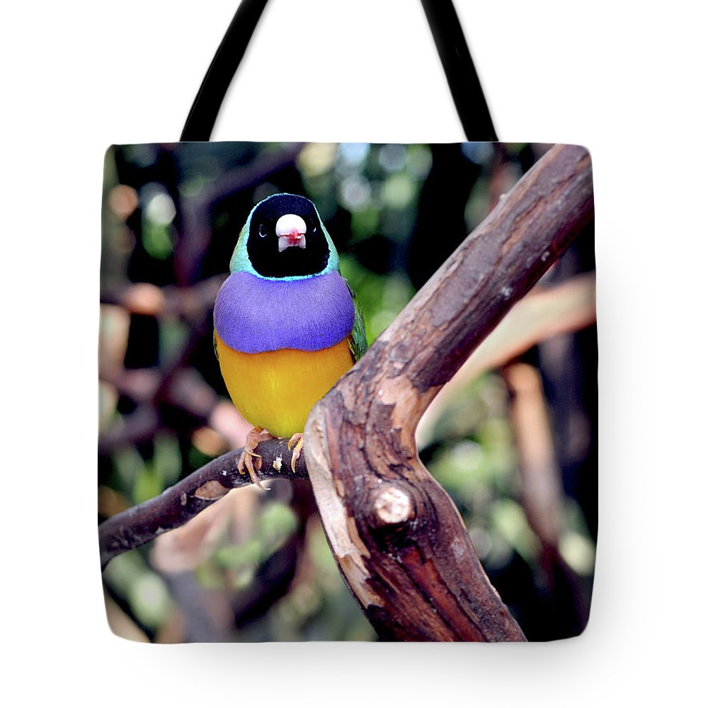 Lady Gouldian Finch Tote Bag featuring the photograph Lady Gouldian Finch by Haleh Mahbod