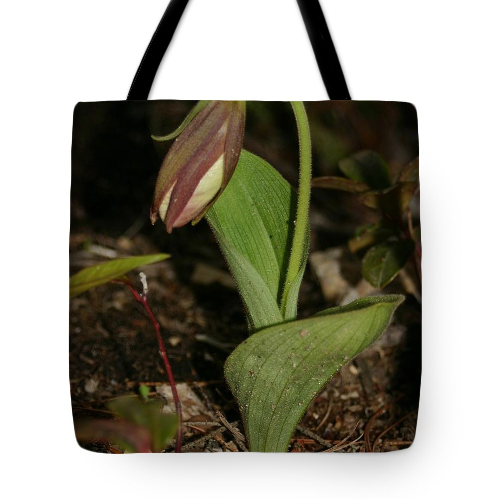 Nature Tote Bag featuring the pyrography Lady Slipper 2 by Robert Morin