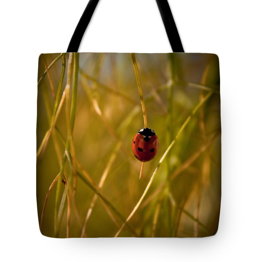 Ladybug Tote Bag featuring the photograph Ladybug by Danielle Silveira