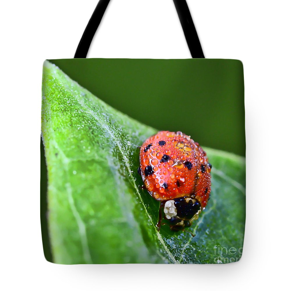 Ladybug Tote Bag featuring the photograph Ladybug With Dew Drops by Kerri Farley