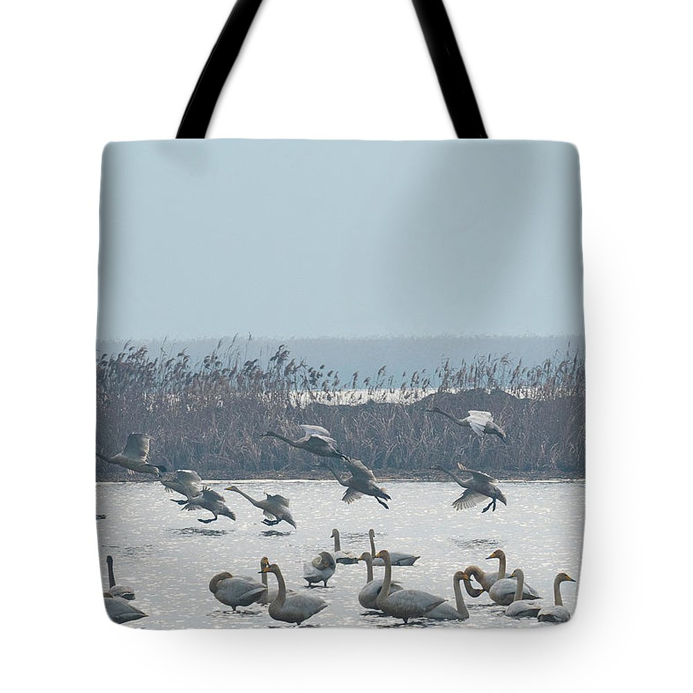 Whooping Swans Tote Bag featuring the photograph Landing by Eric Nelson