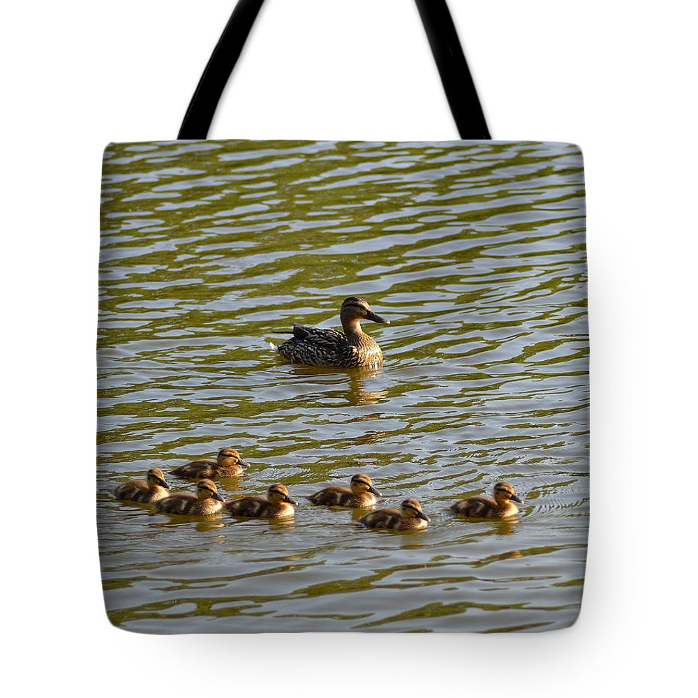 Female Mallard Tote Bag featuring the photograph Late Afternoon Swim by Belinda Stucki
