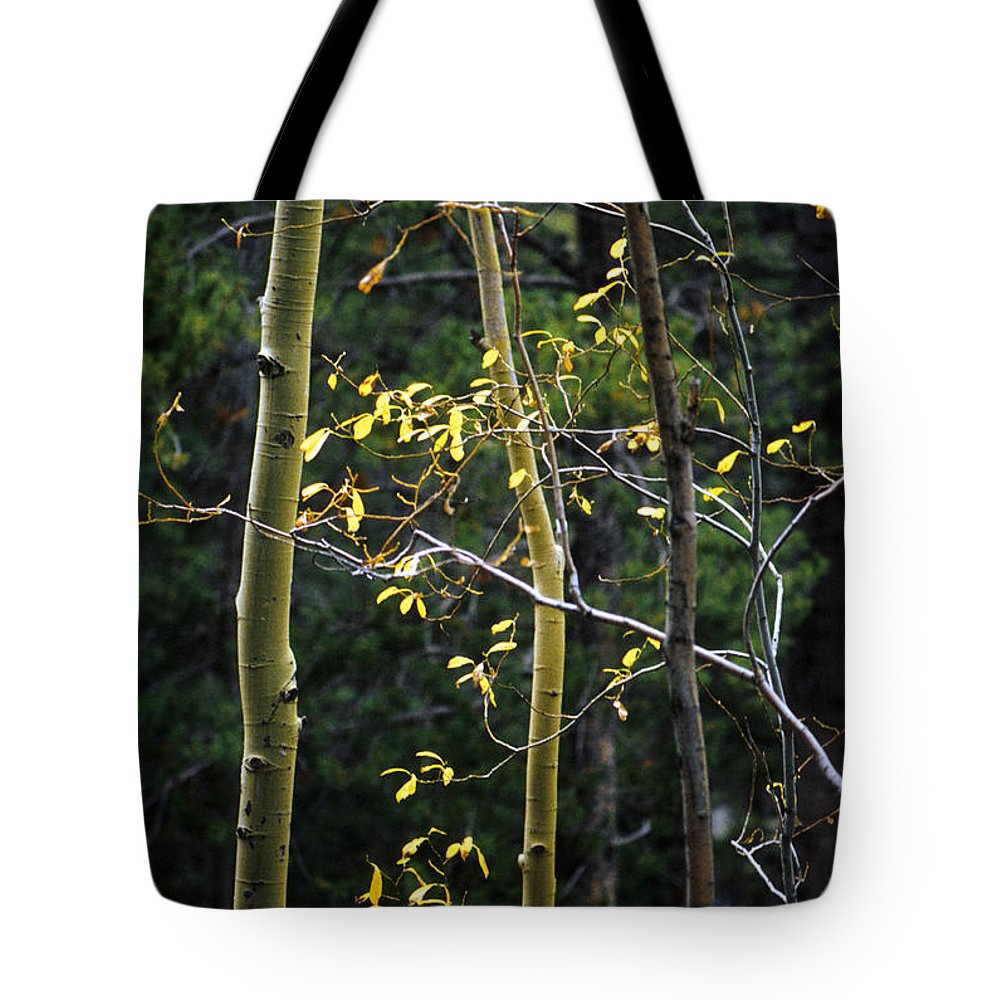 Aspen Tote Bag featuring the photograph Late Aspen by Jerry McElroy