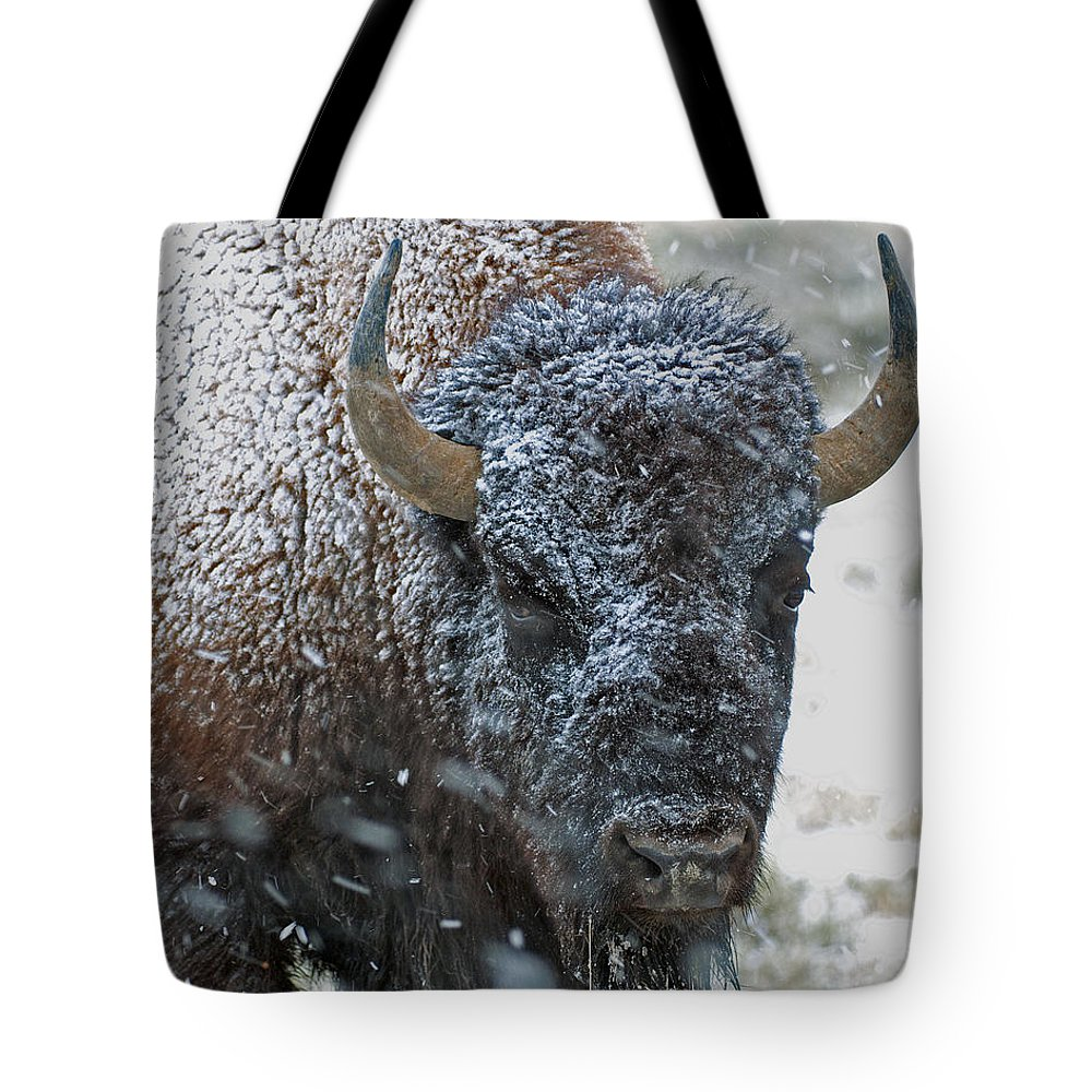 Buffalo Tote Bag featuring the photograph Early Spring Late Snow Buffalo by Gary Langley
