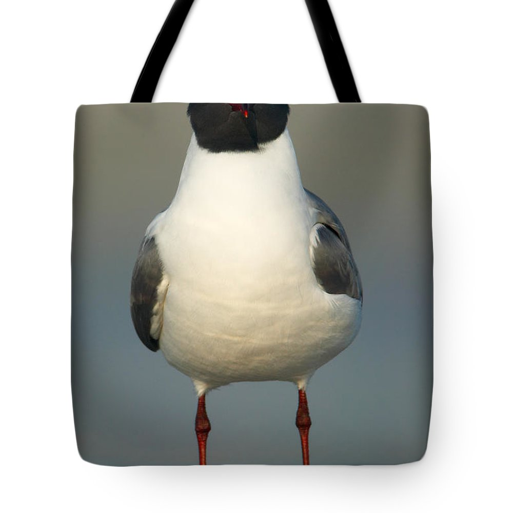 Clarence Holmes Tote Bag featuring the photograph Laughing Gull by Clarence Holmes