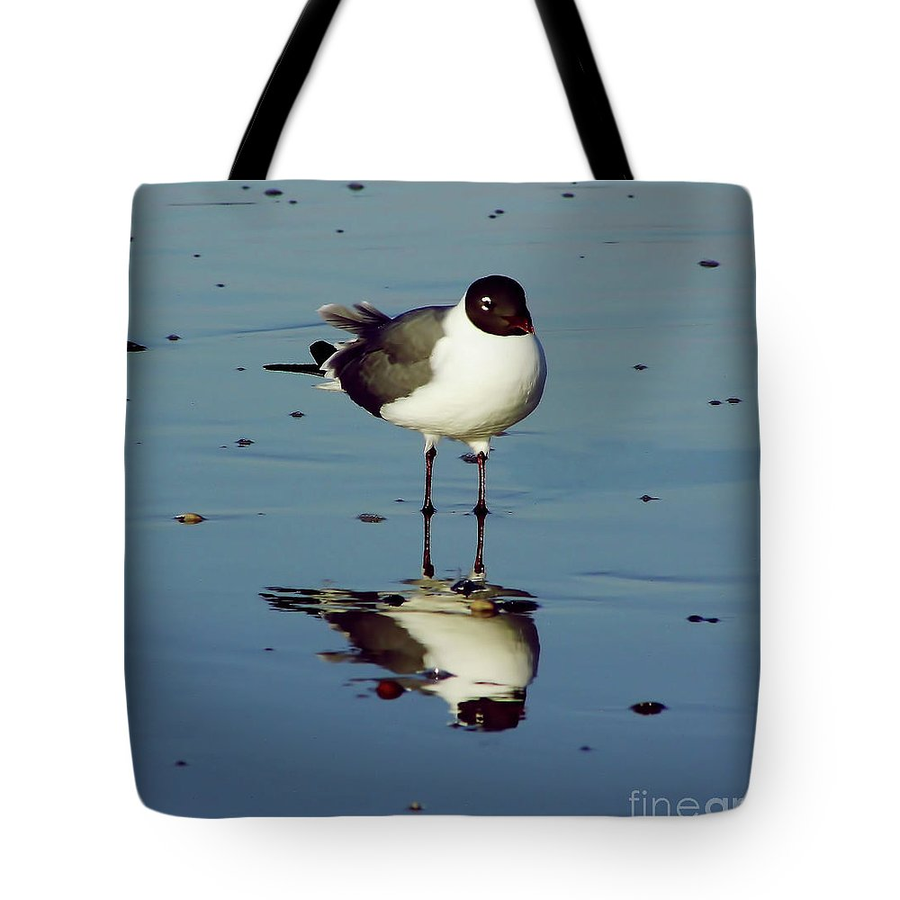 Bird Tote Bag featuring the photograph Laughing Gull by D Hackett