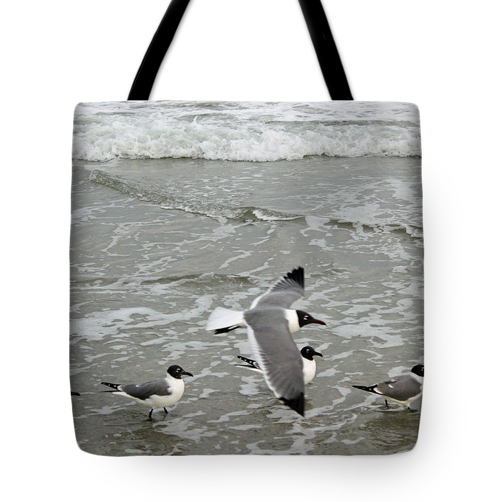 Laughing Gull Tote Bag featuring the photograph Laughing Gulls Iv- Follow Me by Suzanne Gaff