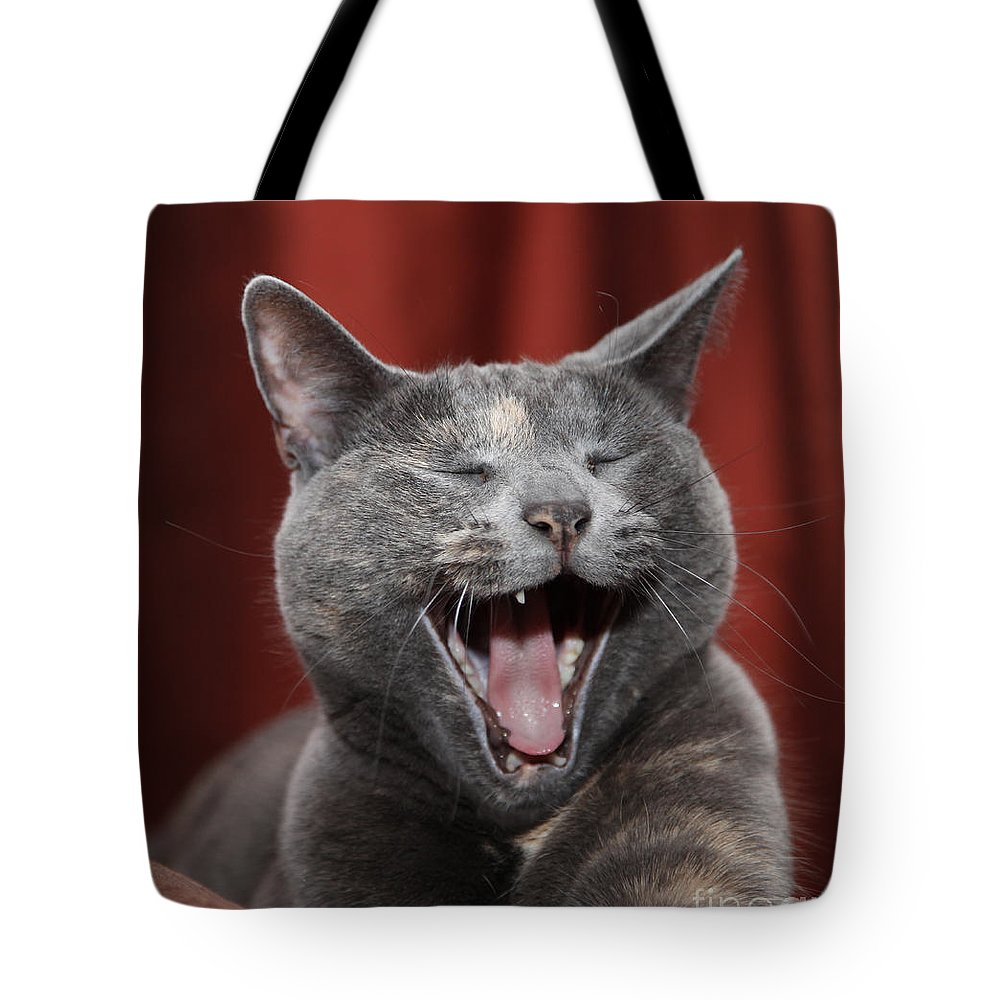 Kitty Tote Bag featuring the photograph Laughing Kitty by Amanda Barcon