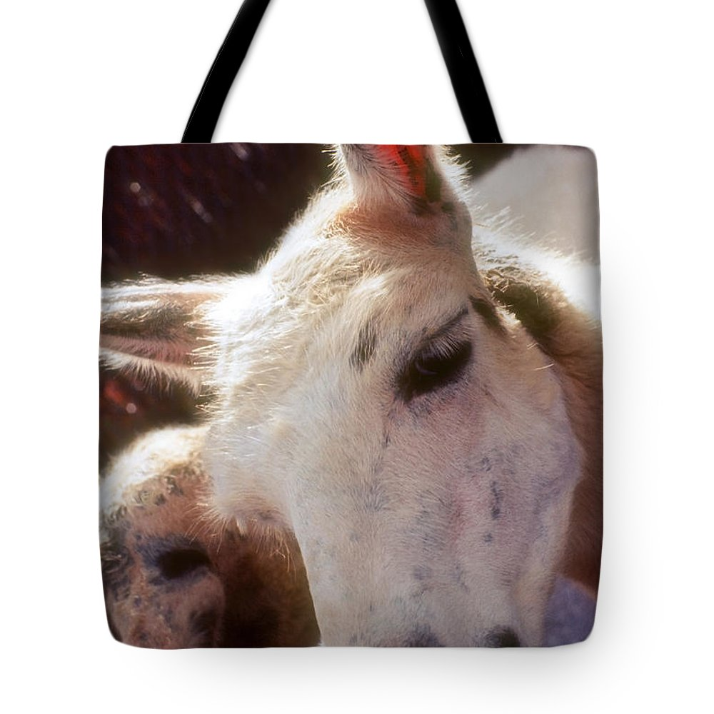 Llama Tote Bag featuring the photograph Laughing Llama by Stephen Anderson