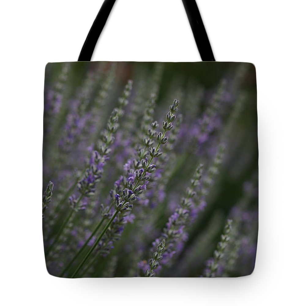 Lavender Tote Bag featuring the photograph Lavender by Carrie Goeringer