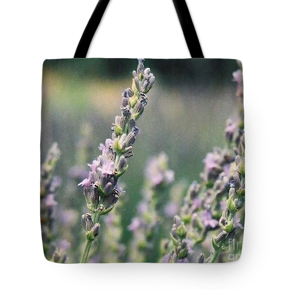 Flowers Tote Bag featuring the painting Lavender by Eric Schiabor
