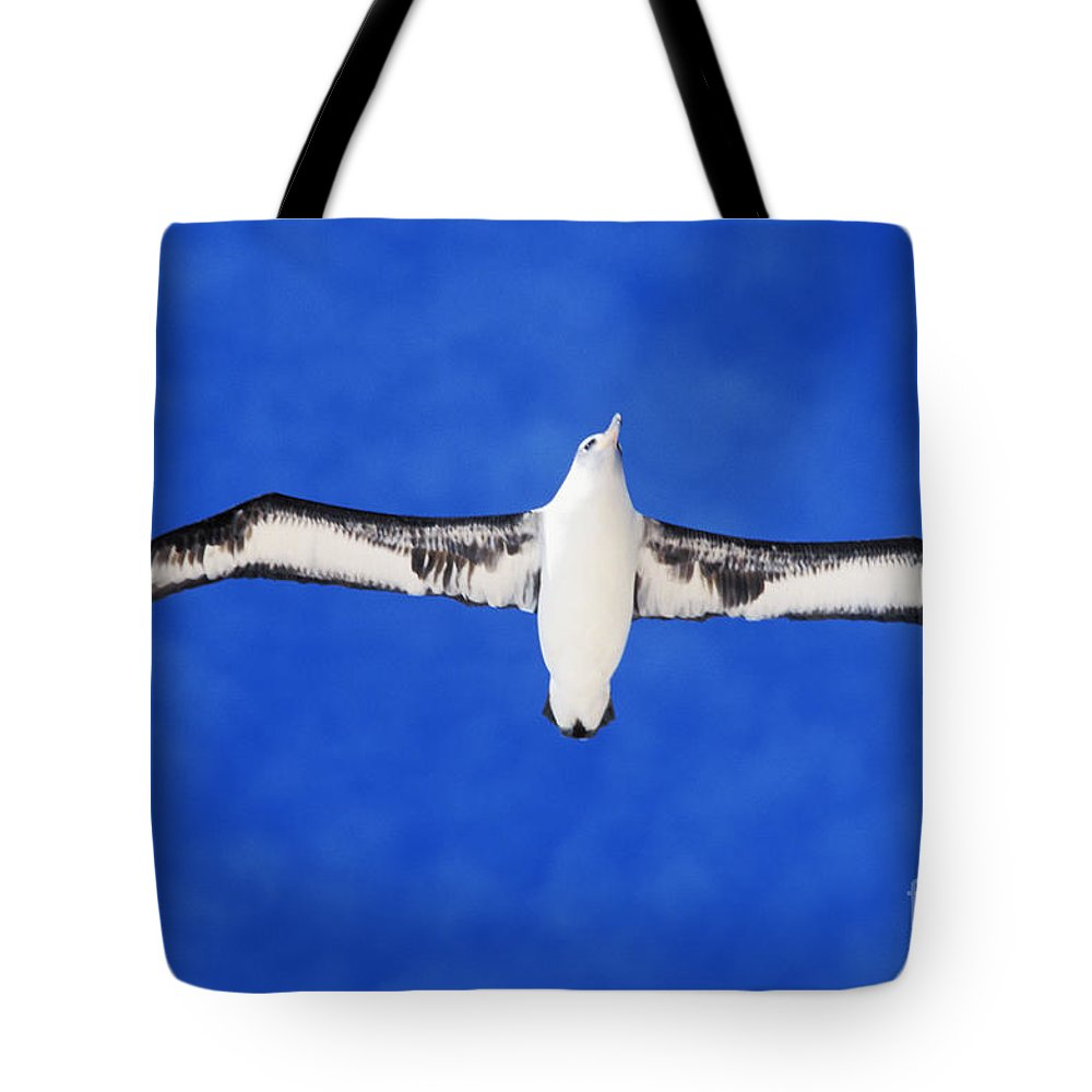 Adult Tote Bag featuring the photograph Laysan Albatross by Ed Robinson - Printscapes