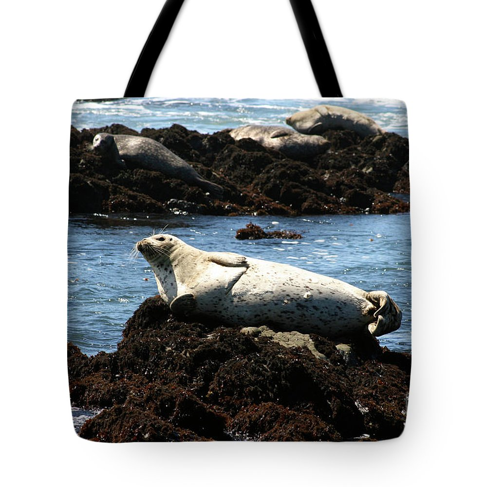 Lazy Seal Tote Bag featuring the photograph Lazy Seal by Brooke Roby