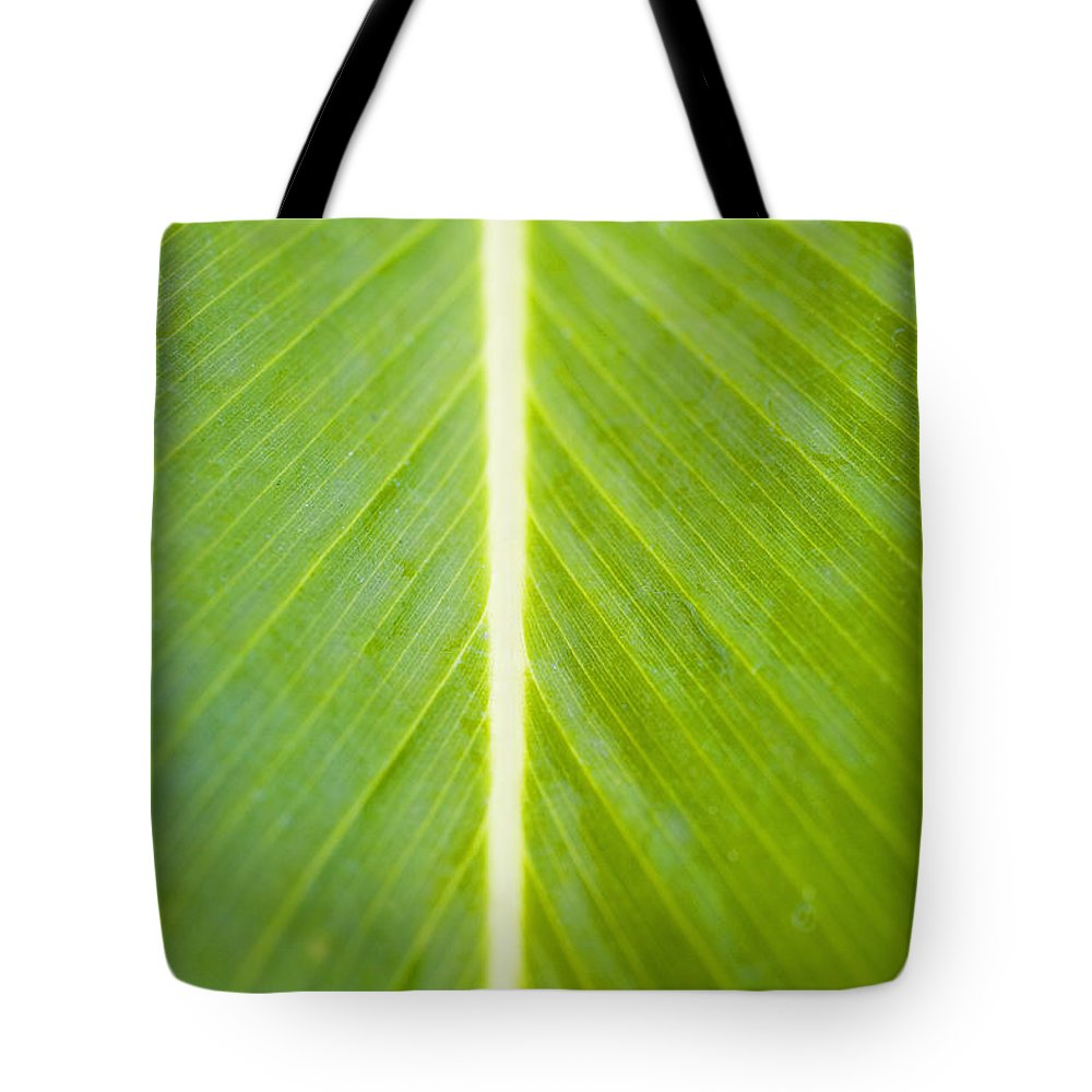 Botanical Tote Bag featuring the photograph Leaf Close-up by Tomas del Amo - Printscapes